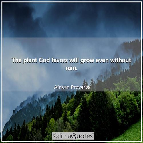 The plant God favors will grow even without rain.