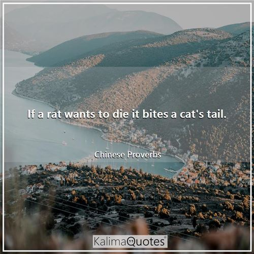 If a rat wants to die it bites a cat's tail.